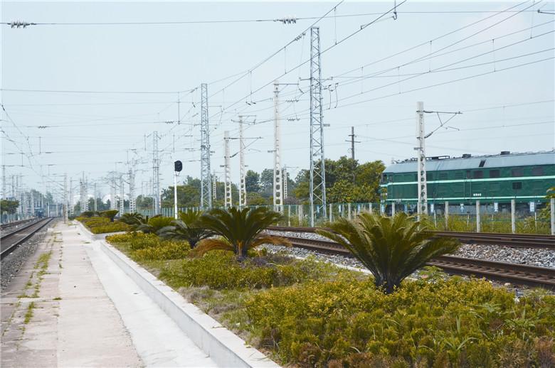 向西火车站绿化工程